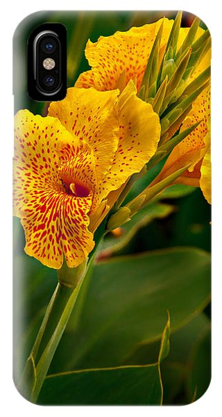 Canna Blossom IPhone Case
