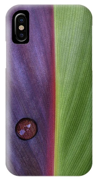 Plants iPhone Case - Canna by Stephen Clough