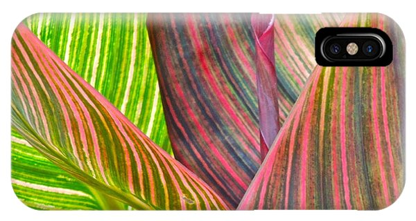 Canna Tropicana Color IPhone Case