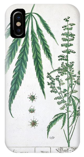 Botanical iPhone Case - Cannabis by Elizabeth Blackwell