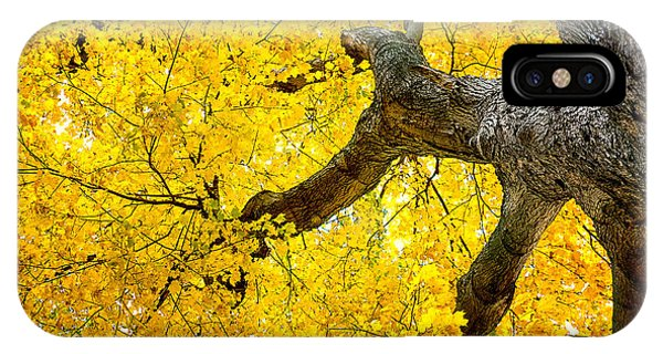 Reach iPhone Case - Canopy Of Autumn Leaves by Tom Mc Nemar