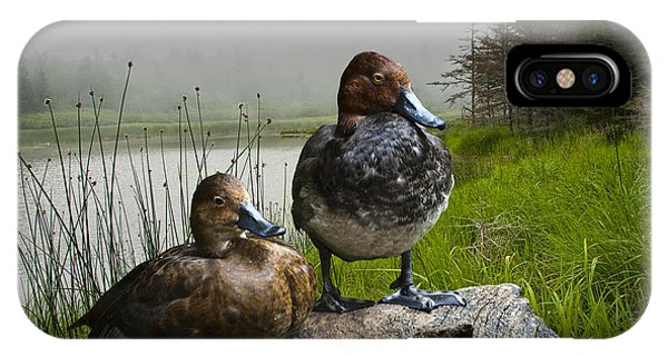 Canvasback Duck Pair By A Pond IPhone Case