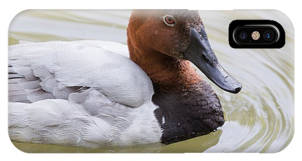 Canvasback IPhone Case