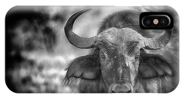 Cape Buffalo IPhone Case