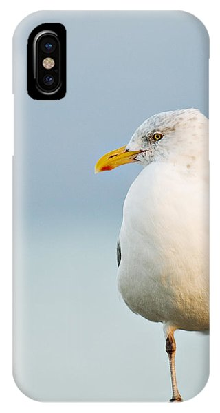 Cape Cod Seagull IPhone Case