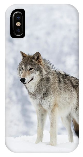 Winter iPhone Case - Captive  Female Tundra Wolf In Snow by Doug Lindstrand