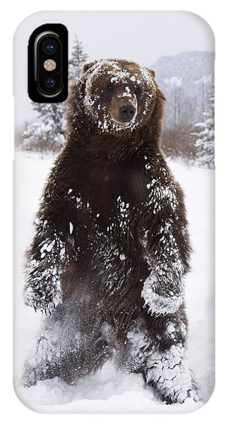 Captive Grizzly Stands On Hind Feet IPhone Case
