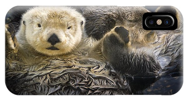 Captive Two Sea Otters Holding Paws At IPhone Case