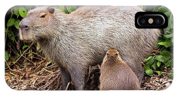 Capybara Suckling Phone Case by Paul Williams