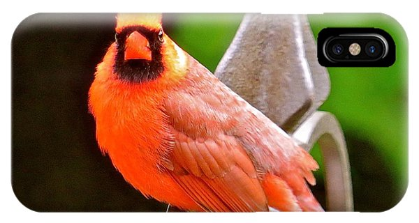 Cardinal 108 Phone Case by Patsy Pratt