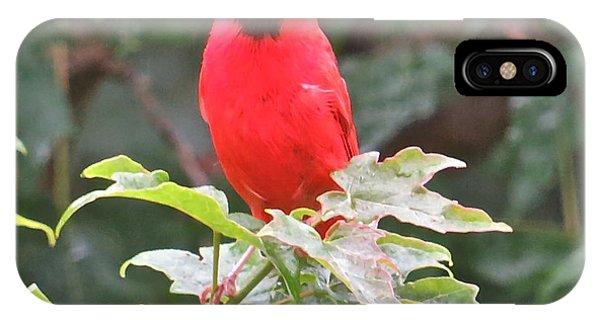 Cardinal 111 Phone Case by Patsy Pratt