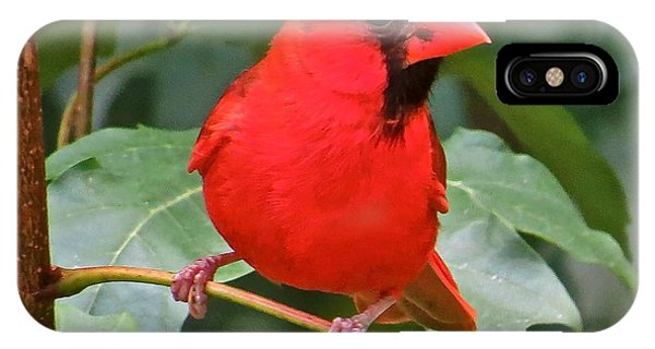 Cardinal 117 Phone Case by Patsy Pratt