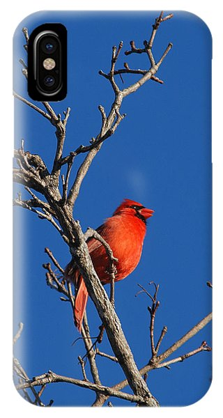 Cardinal And Blue IPhone Case