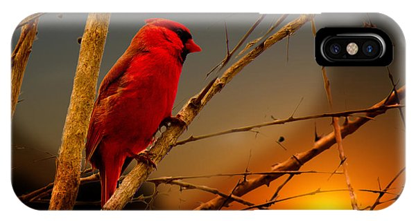 Cardinal At Sunset Valentine IPhone Case