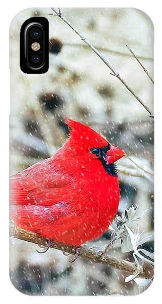 Cardinal Bird Christmas Card IPhone Case