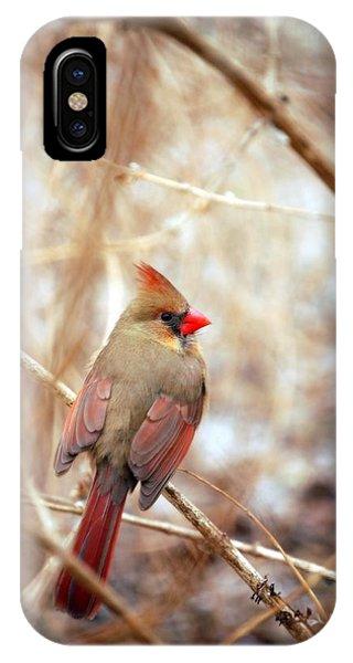 Cardinal Birds Female IPhone Case