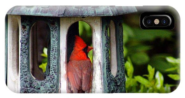 Cardinal In Bird Feeder IPhone Case