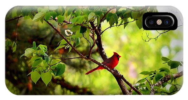 Cardinal In Dogwood IPhone Case