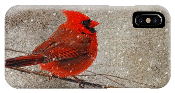 Cardinal In Snow IPhone Case