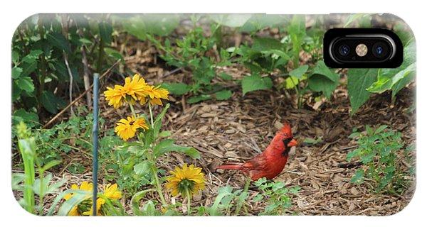 Cardinal In The Gardner IPhone Case
