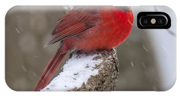 Cardinal In The Snow IPhone Case