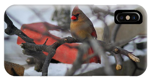 Cardinal Out On A Limb IPhone Case