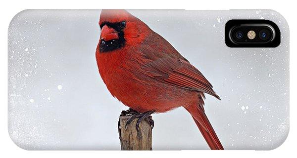 Cardinal Perching IPhone Case