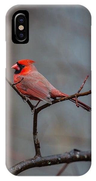 Cardinal Sing IPhone Case