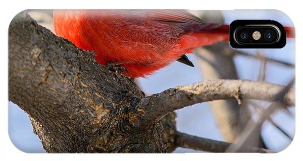 Cardinal Up Close IPhone Case
