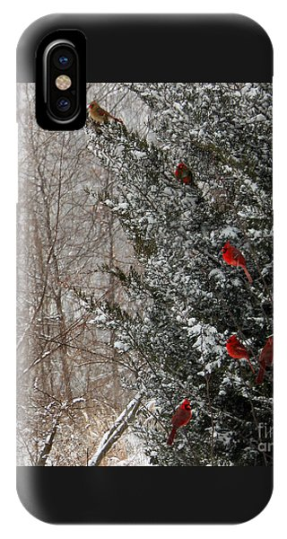 Cardinals In Winter 1 Square IPhone Case