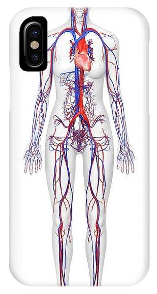 Brachial Vein iPhone Cases | Fine Art America