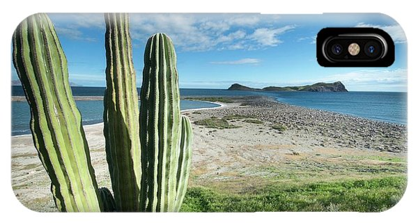 Adapted iPhone Case - Cardon Cactus (pachycereus Pringlei) by Christopher Swann
