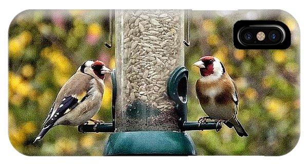 Carduelis Carduelis 'goldfinch' IPhone Case