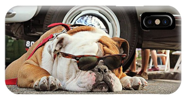 Carmel Cool Dog IPhone Case