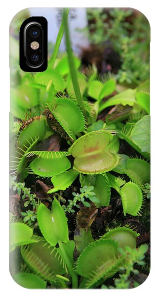 Far North Queensland iPhone Case - Carnivorous Plants Such As These Venus by Paul Dymond