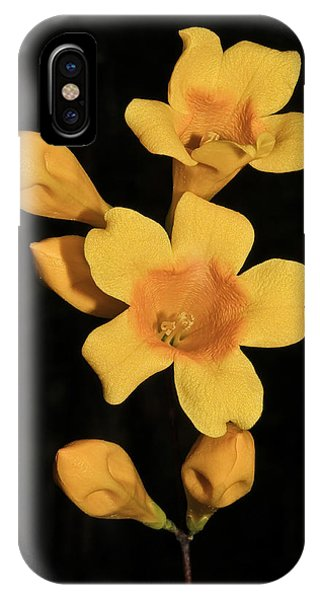 Carolina Jessamine IPhone Case