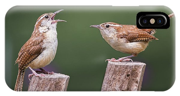 Carolina Wren Serenade IPhone Case