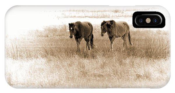 Carrot Island Ponies IPhone Case