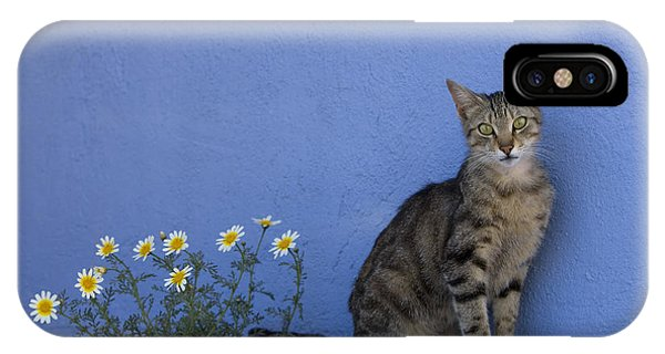 Cat And Flowers In Greece IPhone Case