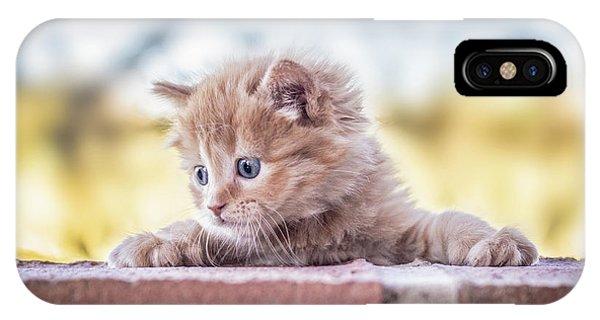 Cute Kitten iPhone Case - Cat by Daniel Villalobos