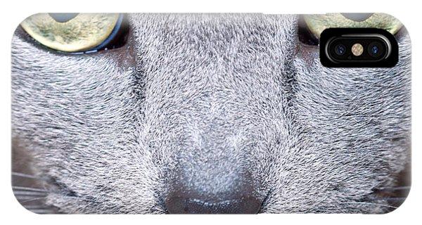 Detail iPhone Case - Cat Eyes by Nailia Schwarz