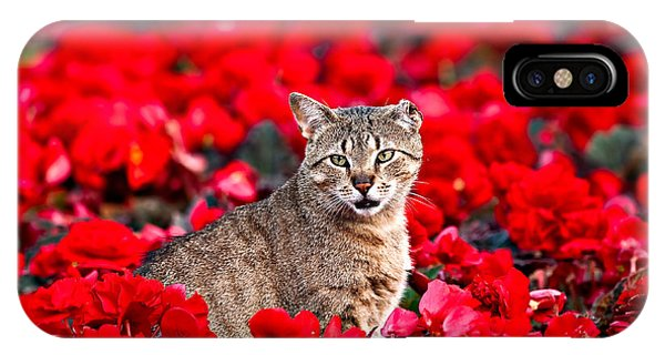 Cat In Red IPhone Case