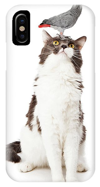 Cat Looking Up At A Bird IPhone Case
