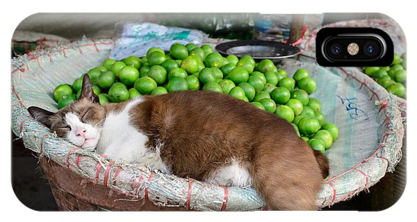 Cat Sleeping Among The Limes IPhone Case