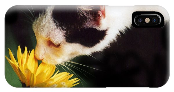 Cat Smelling Flower IPhone Case