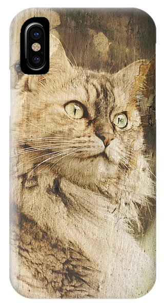 Cat Texture Portrait IPhone Case