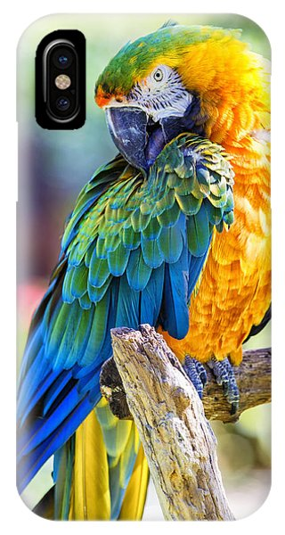 Macaw iPhone Case - Catalina Macaw by Bill Tiepelman