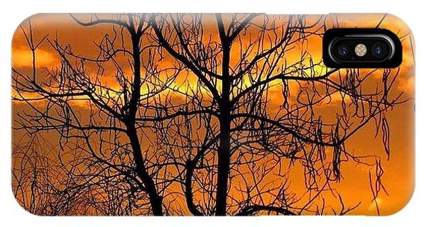 Catalpa Orange IPhone Case