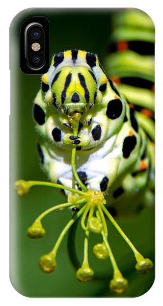 Caterpillar Of The Old World Swallowtail IPhone Case