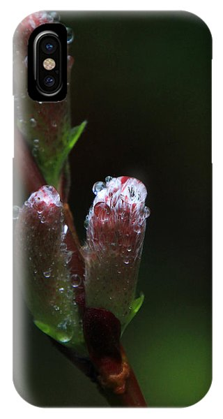 Catkin Raindrops IPhone Case